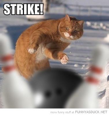 funny-cat-bowling-strike-pics