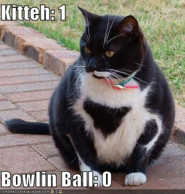 kittie_vs_bowling_ball
